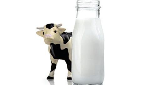 dibalik susu sapi
